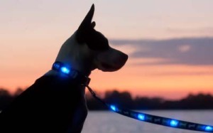 Dog E Glow Light Up Leashes Review   Holiday Gift Guide